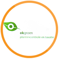 OK groen logo